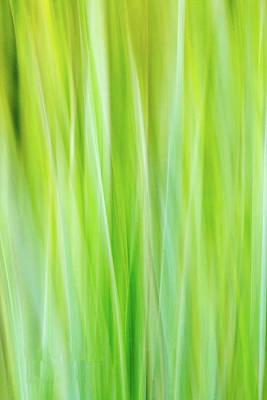 Photograph - Abstract Grass by Deb Buchanan
