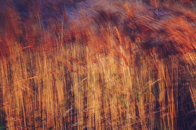 Photograph - Abstract Grasses In The Evening by Toni Hopper