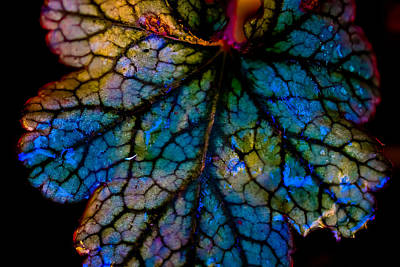 Stained Glass 3 Photograph - Abstract Leaf by Mitch Shindelbower