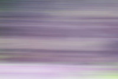 Photograph - Abstract Lilacs by Clare Bambers