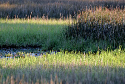 Print featuring the photograph Abstract Marsh Grasses by Bruce Gourley