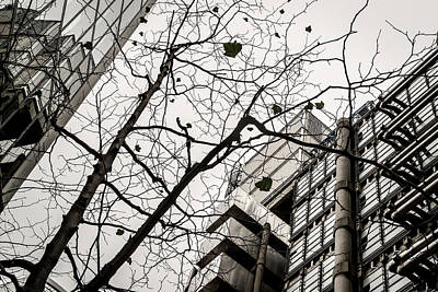 Photograph - Abstract Modern Building And Tree Silhouette Pattern Design by John Williams