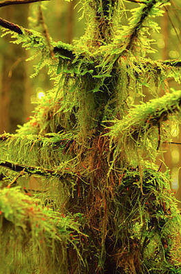 Photograph - Abstract Mossy Branch by Tikvah's Hope