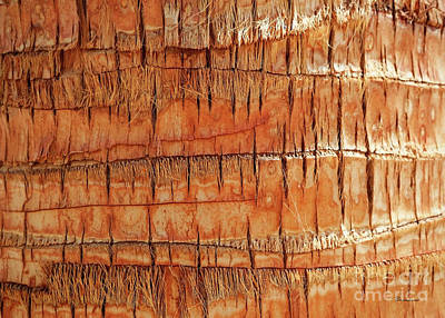 Photograph - Abstract Nature Palm Tree Bark 704 Orange by Ricardos Creations