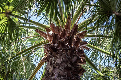 Photograph - Abstract Nature Tropical Palm Tree 1872a Green by Ricardos Creations