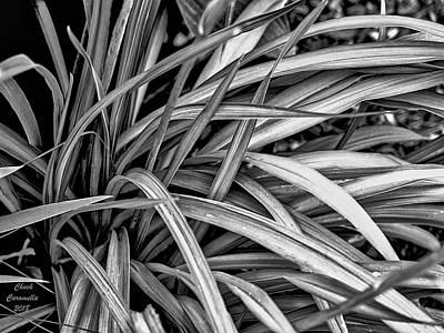 Photograph - Abstract Of Leaves ... by Chuck Caramella