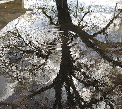 Photograph - Abstract Of Nature by Marie Neder
