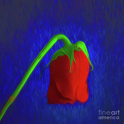 Photograph - Abstract Of Red Rose  ... by Chuck Caramella