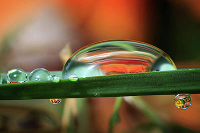 Dewdrops Photograph - Abstract Orange - Crop by Gary Yost