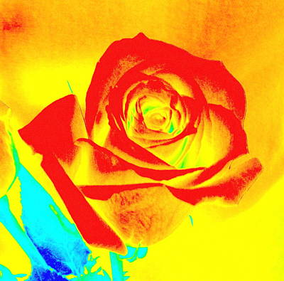 Single Orange Rose Abstract Art Print
