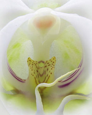 Photograph - Abstract Orchid by Patti Deters