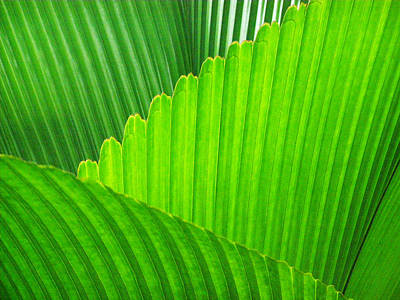 Photograph - Abstract Palm Leaves by David Clode