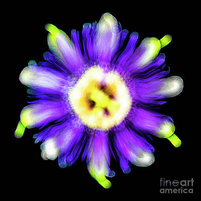 Photograph - Abstract Passion Flower In Violet Blue And Green 002a by Ricardos Creations