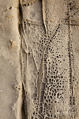 Photograph - Abstract Perforated Rock by Sharon Foelz
