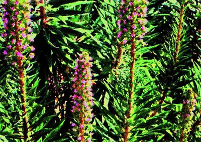 Photograph - Abstract Plants 83 by Kristalin Davis