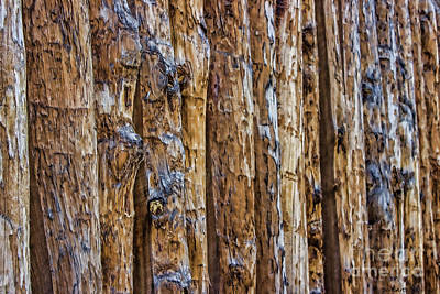 Photograph - Abstract Posts by Roberta Byram