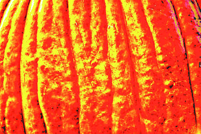 Photograph - Abstract Pumpkin Shadows by Gina O'Brien