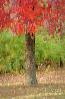 Photograph - Abstract Red Maple Tree by Tamara Becker