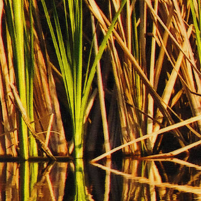 Photograph - Abstract Reeds Triptych Top by Steven Sparks