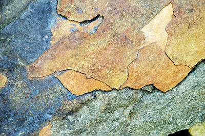 Animal Paintings David Stribbling - Abstract Rock by Christina Rollo