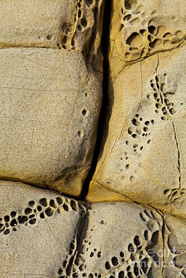Photograph - Abstract Rock Pocked With Holes And Divided By Lines by Sharon Foelz