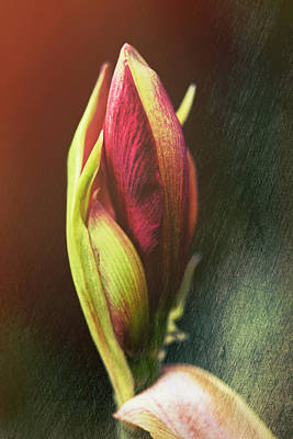 Photograph - Abstract Rose by Pictorial Decor