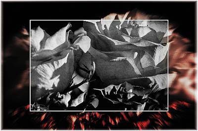 Photograph - Abstract Roses by Susan McMenamin