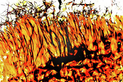 Photograph - Abstract Saw Grass Iv by Gina O'Brien