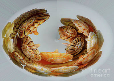 Photograph - Abstract Shells by Patti Whitten