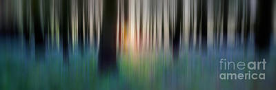 Bluebells Wall Art - Photograph - Spring Forest by Rod McLean