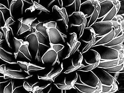 Photograph - Abstract Succulent by Ranjini Kandasamy