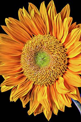 Abstract Sunflower Art Print