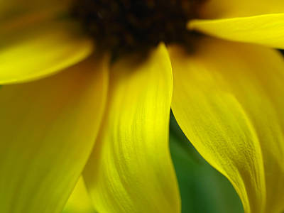Abstract Sunflower Art Print by Juergen Roth