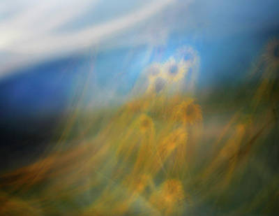 Photograph - Abstract Sunflowers by Marilyn Hunt