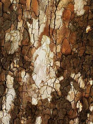 Redish Photograph - Abstract Tree Bark by Marsha Heiken