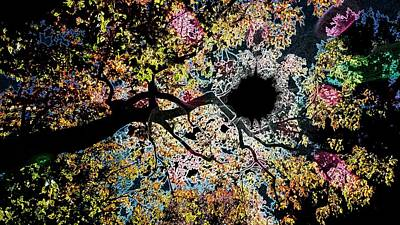Pink Black Tree Rainbow Photograph - Abstract Tree Of Color by Kathleen Voort