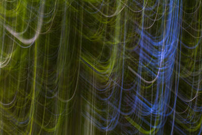 Photograph - Abstract Trees 2 by Clare Bambers