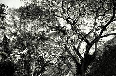 Photograph - Abstract Trees 707 by Kristalin Davis