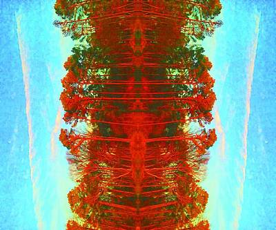 Photograph - Abstract Trees by Ashley Heath