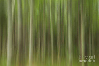 Photograph - Abstract Trees by Karin Pinkham
