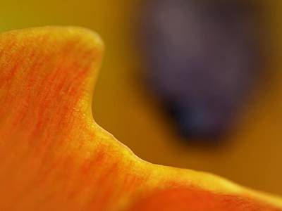 Photograph - Abstract Tulip Photography Artwork by Juergen Roth