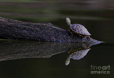 Photograph - Abstract Turtle by Douglas Stucky