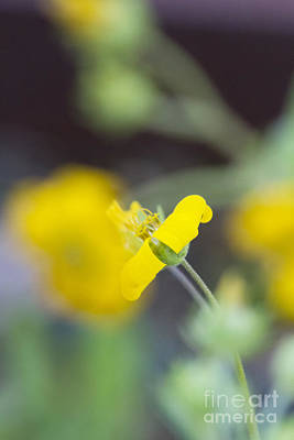Photograph - Abstract Wildflower by David Cutts