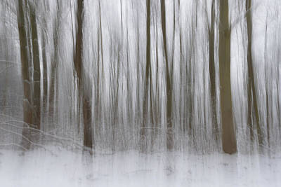 Intentional Camera Movement Photograph - Winter Forest by Chris Dale