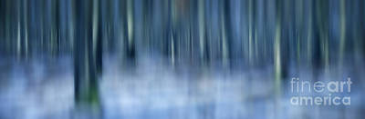 Winter Landscapes Photograph - Winter Forest by Rod McLean