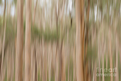 Photograph - Abstract Woods Photograph by Ivy Ho