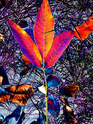 Abstracted Fall Leaves Art Print by Beth Akerman