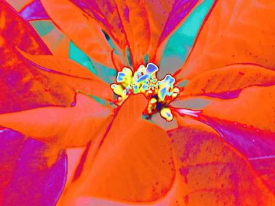 Photograph - Abstracted Poinsettia by Beth Akerman