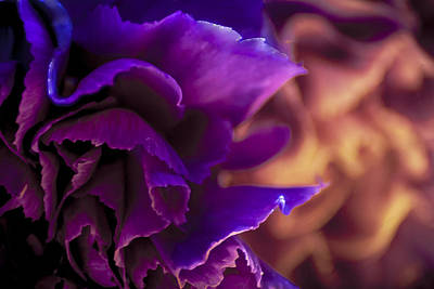 Photograph - Abstracting The Flowers by Karen Musick