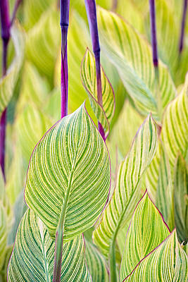 Photograph - Abstracts In Nature by Jeff Abrahamson